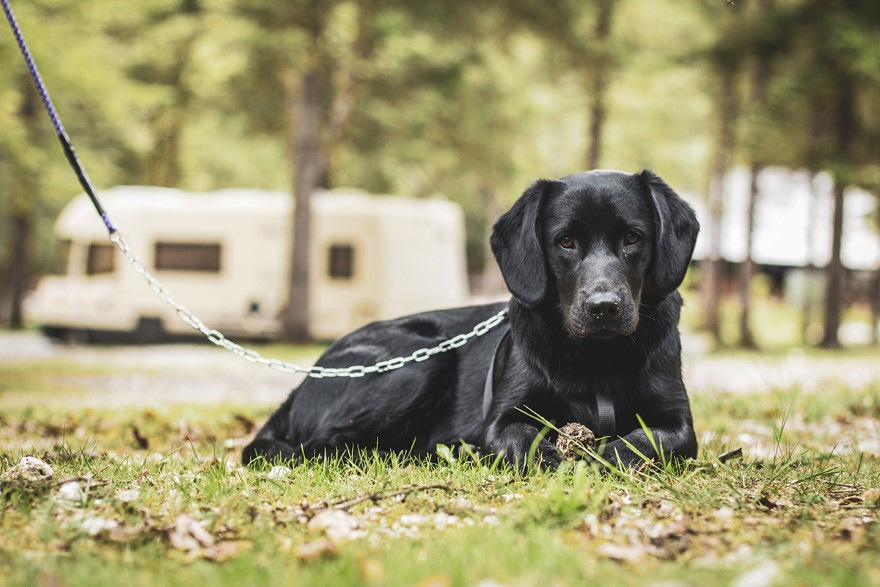 Camp Bohinj Pet Friendly